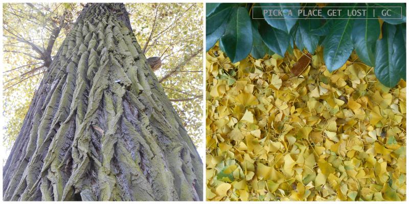 brno_autumn_1